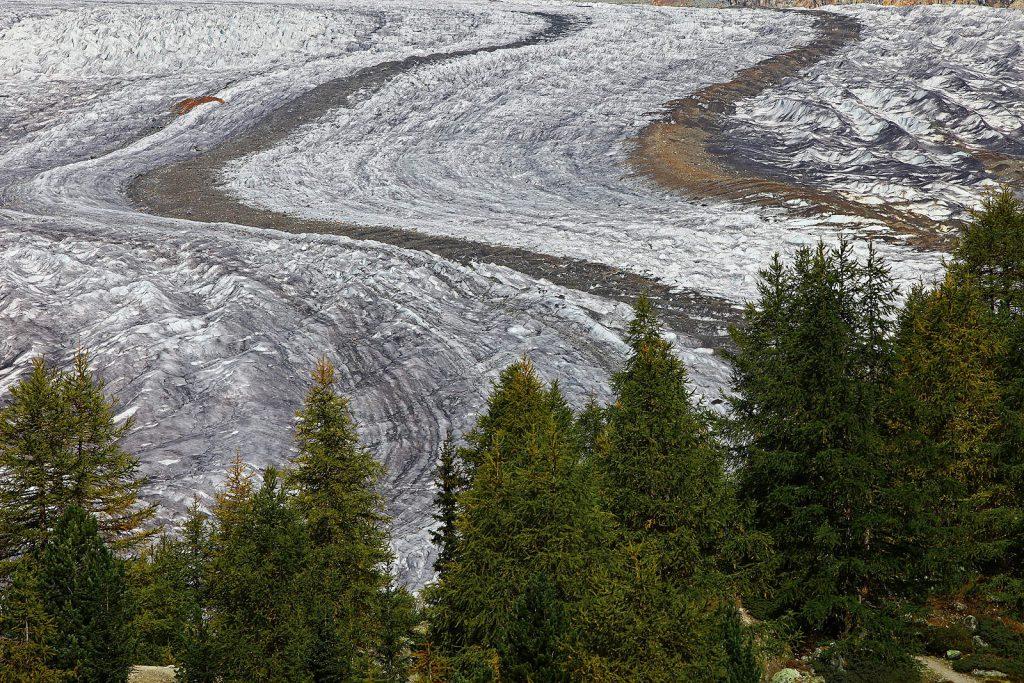 Iako otječe na južnu stranu, ledenjak Aletsch nosi toliku količinu leda, da dopire daleko ispod granice drveća, što je rijedak slučaj u Alpama.