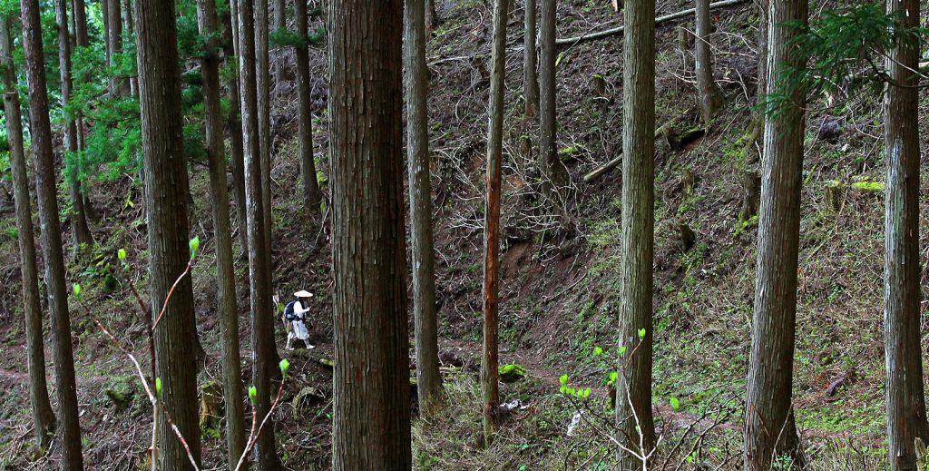 Omino-okugake-michi is one part of the Kumano Kodo pilgrimage routes