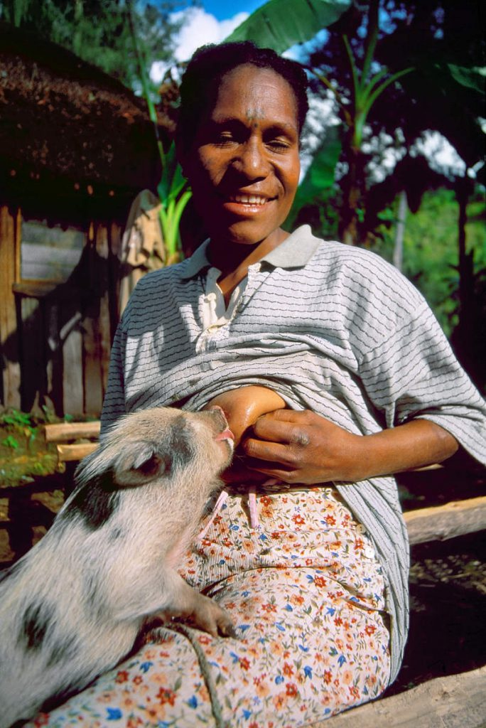 A unique custom of the highlands people is still alive. Pigs are the most important and sacred animals to the people, so when a piglet losses its mother, women breastfeed it.
