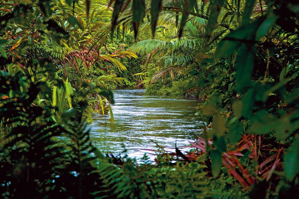 Rajski vrt u kojem žive nudi im sve što im je potrebno za život.