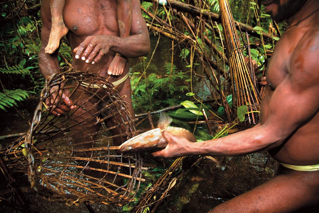 In the forest they hunt wild pigs, cassowaries and other smaller game, and in the creeks they build dams for fishing.