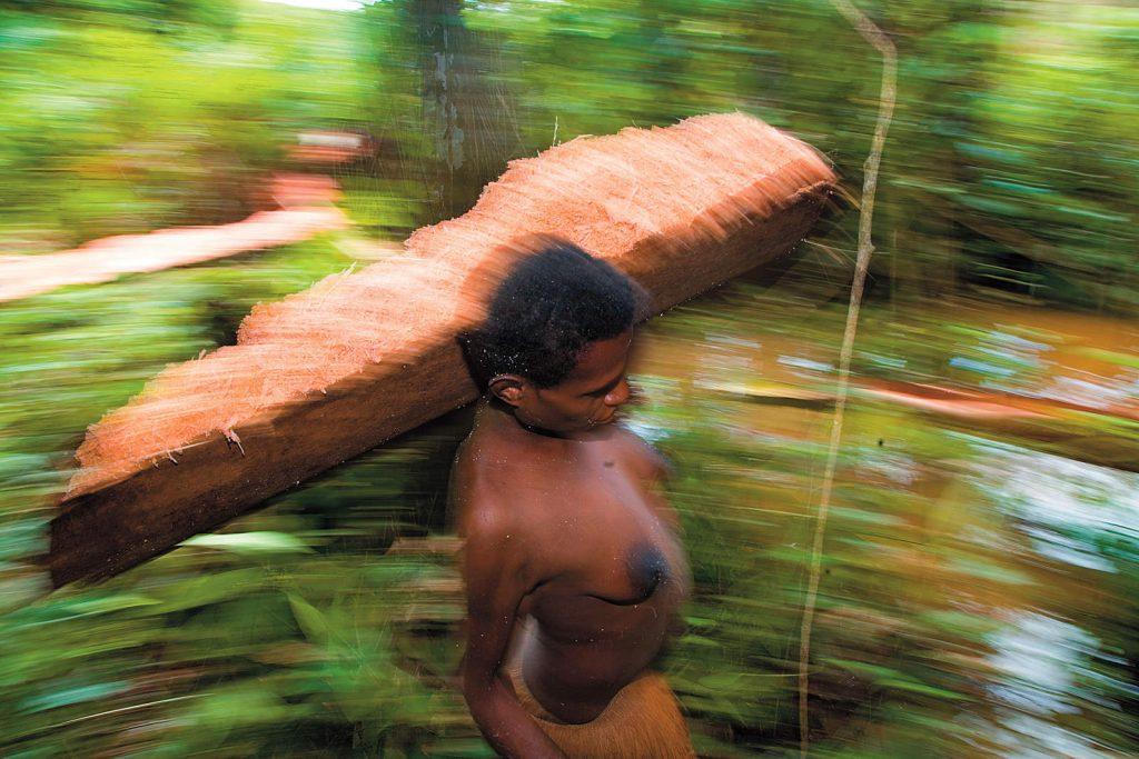 Glavna hrana im je škrob dobivena iz sago palme.