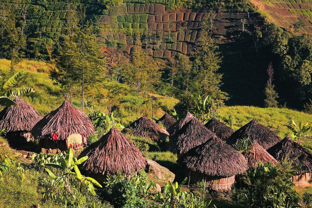 Žive u slikovitim selima, obrađuju polja slatkog krumpira i uzgajaju svinje.